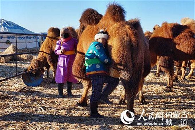 骆驼乳功效的最新研究成果