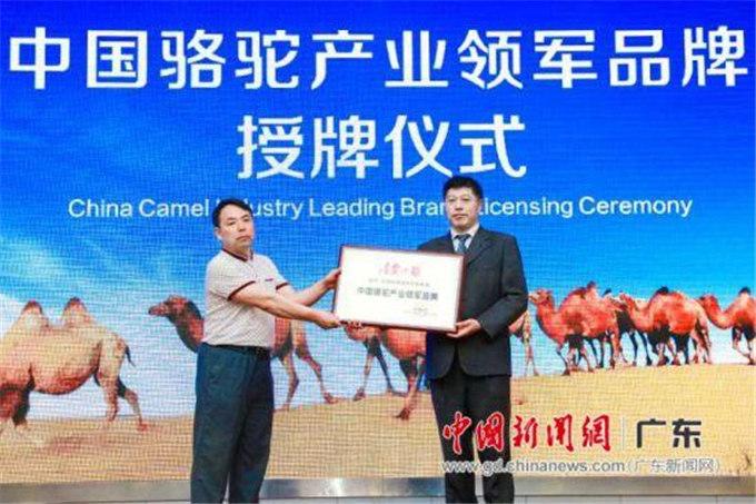 骆驼与糖尿病健康