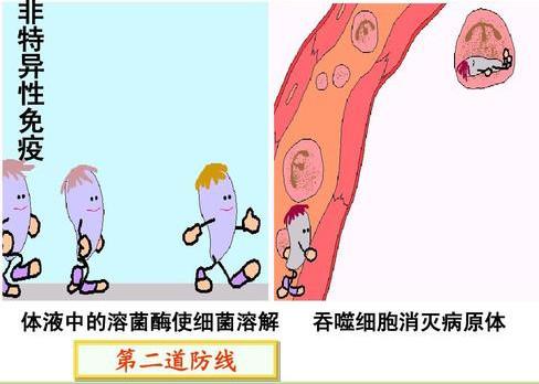 骆驼奶中的活性溶菌霉究竟是什么?