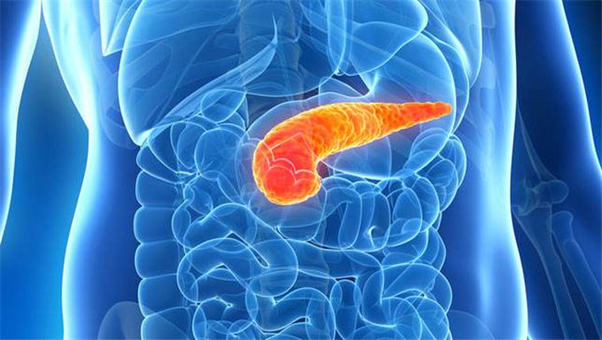 什么是胰岛素以及是什么脏器在分泌胰岛素