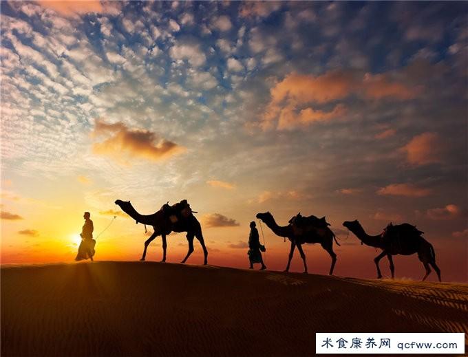 骆驼为什么没有糖尿病症状