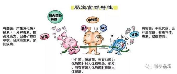 科学家阐明肠道菌群和糖尿病发生之间的关联