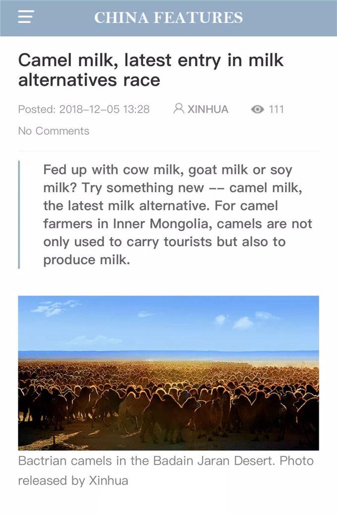 【特稿】新华社英文客户端:驼奶,奶业市场的新秀