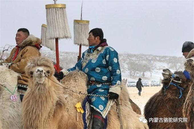 骆驼乳和骆驼肉的功效