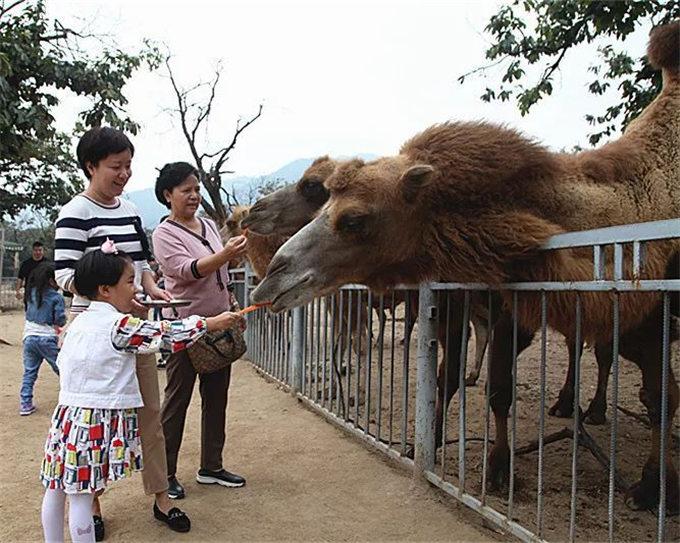 骆驼为什么不怕渴?