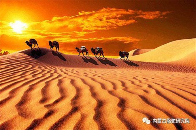 骆驼血的研究进展