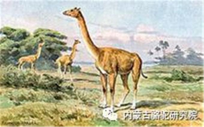 古骆驼你知道吗