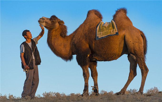 骆驼乳中的长链不饱和脂肪酸