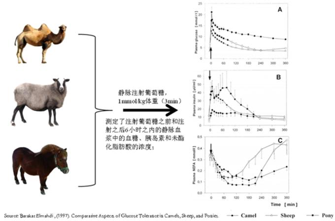 骆驼体内血糖水平和胰岛素含量的测定